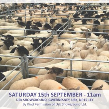 Williams Assoc Sheep Sale Inside Sept 15th 2018 PRINT_Page_01